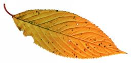 Rough Pastel Leaf 1