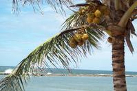 beautiful coastal landscape in Brazil 2