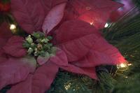Christmas Tree Pieces 14