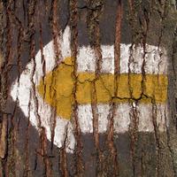 arrow on a tree
