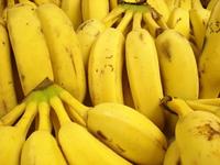 Olha as bananas.... olha o bananeiro! 4