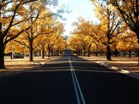 Autumn in Australia 1