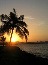 Cononut Sunset