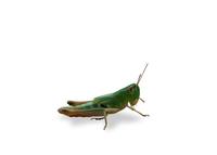 Grashopper 2