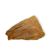 Tree Fossil