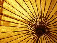 Golden Parasol 1