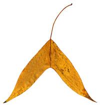 Rough Pastel Leaf 2