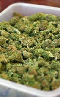 Tray of Marijuana