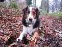 Murphy My Dog 3