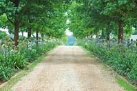 Farm Lane 1