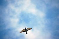Homing pigeons 3
