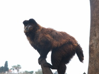 monkey a the tree