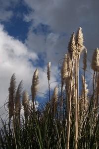 windy contrast 3