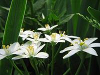 flower_ 5