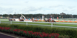 At the races 1