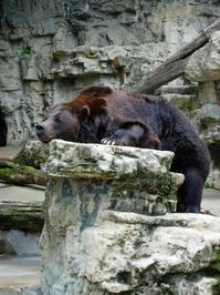 Bored Bear 1