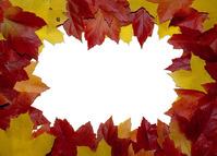 Leaf Boarder