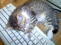 Gato en un teclado. Cat on a keyboard