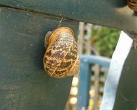 Sleepy Snail