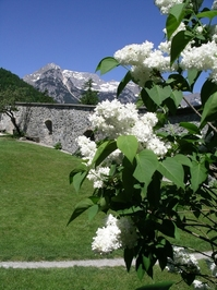 Splendid Austria