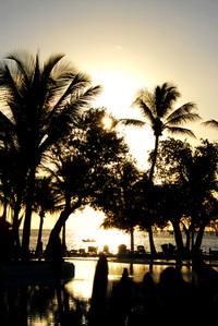 Paradise Scenery