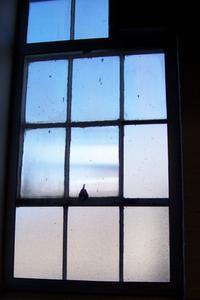 GW Window