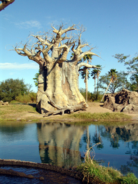 Disney Safari, Orlando
