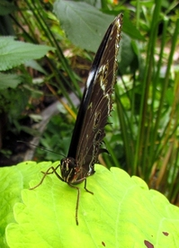 Butterfly macro 1