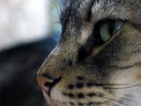 Feline Profile