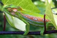 Chameleon Garden