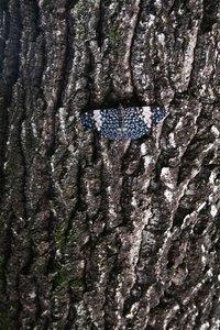 Hidden Butterfly