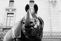 Rhino d'orsay