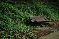 Solitude Bench
