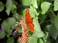 butterfly conservatory 2