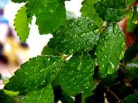 Leaf & water 4