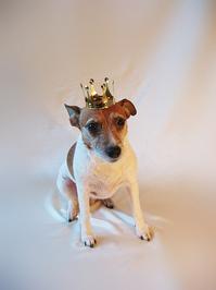 Java, the princess