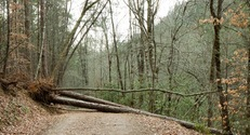 Tree Blocking Path