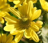 November Blooms 3