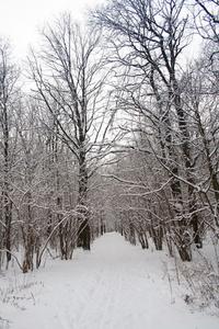 winter trees 27