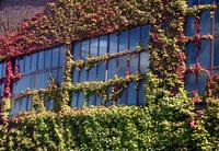 Industrial window 2