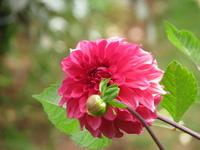 Flowers - Macro 302