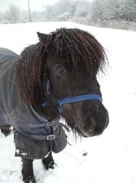 Snow Pony