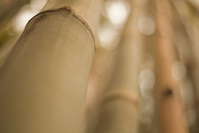 Bamboo Photo Files