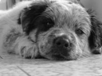 cute doggie 1