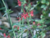 Hummingbird Action 3