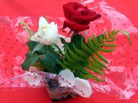 Flor a mesa 1