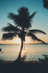 palm tree sundown