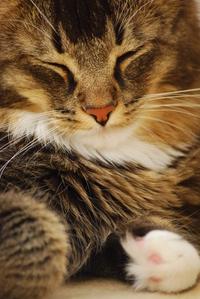 norwegian cat 5