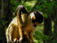 monkey looking down