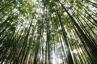bamboo around me 2